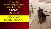 Erzurum'da kaybolan köpek her yerde aranıyor!